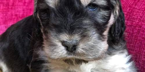 Appeal after puppies stolen
